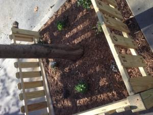 Fresh soil, mulch, and perennial plants.
